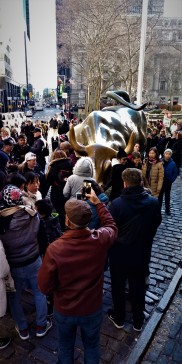 bull crowd